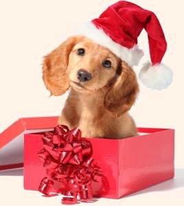 Подари щенка мне, мама! Новогодняя песня про собаку на стихи Олеси Емельяновой.