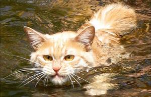 Олеся Емельянова. Кот и пёс. Басня про неблагодарность. Современные басни в стихах.