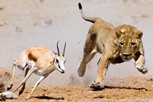 Лев и газель. Басня о мясоедах и вегетарианцах